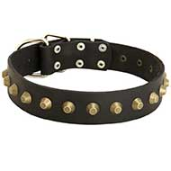 Reliable Leather Bull Terrier Collar with Brass Pyramids