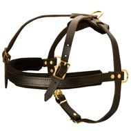 Leather Bull Terrier Harness for Dog Training and Pulling activities