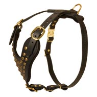 Designer Studded Leather Bull Terrier Harness