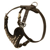 Fashion Studded Leather Bull Terrier Harness for Dog Walking