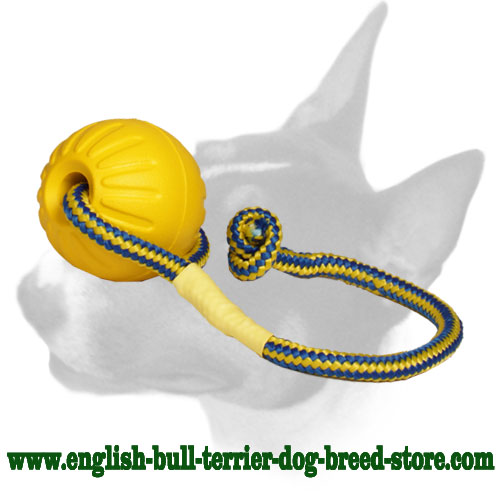 English Bull Terrier ball with rope for training and playing