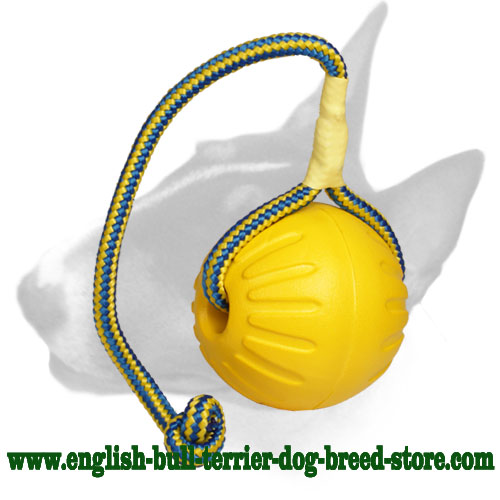 English Bull Terrier ball with strong nylon cord for training and having fun