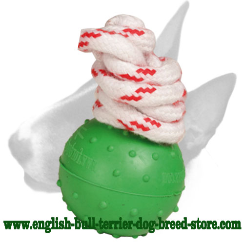 English Bull Terrier eco-friendly dotted ball for training and having fun