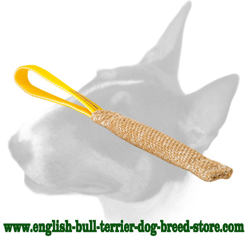 English Bull Terrier bite tug for training puppies