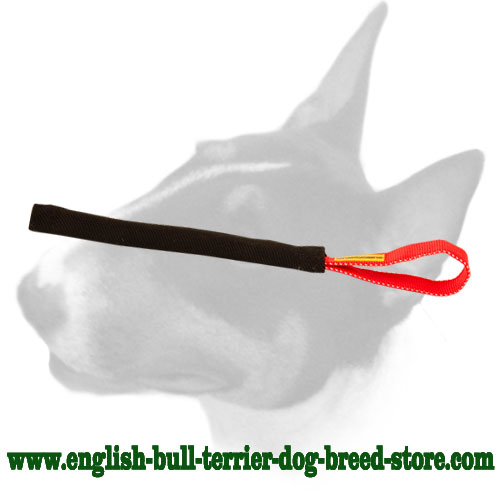 English Bull Terrier bite tug for puppy training and playing