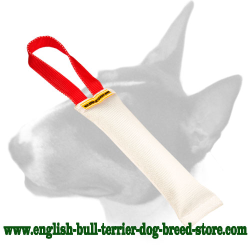 English Bull Terrier fire hose bite tug with nylon handle for training puppies and young dogs