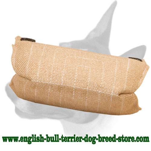 English Bull Terrier bite builder for puppies and young dogs