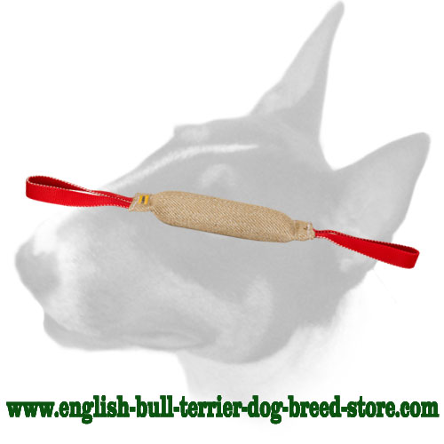 English Bull Terrier bite tug with 2 handles for training puppies