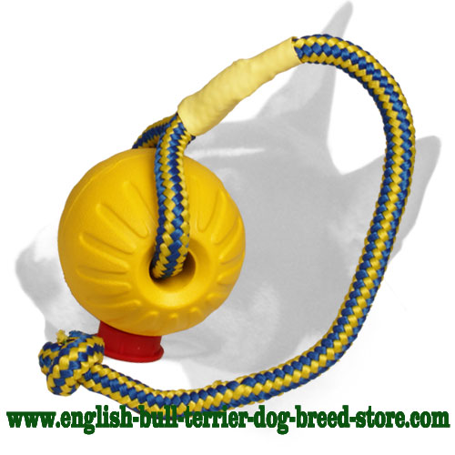 English Bull Terrier ball with strong rope for training and having fun