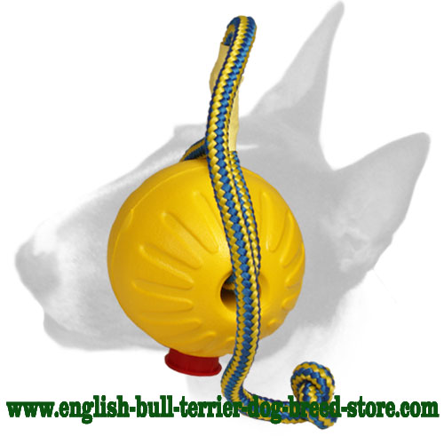 English Bull Terrier ball for training and playing in the water