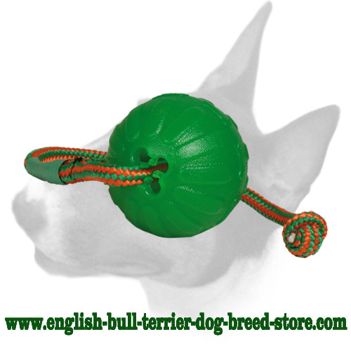 English Bull Terrier rubber ball for training and playing in the water