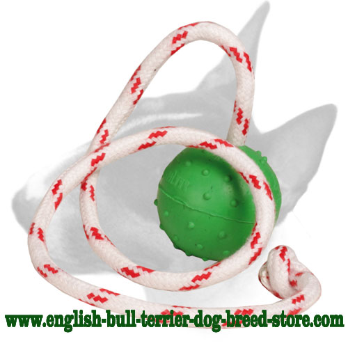 English Bull Terrier water-proof ball with dots for training and playing