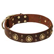 'Space-like' English Bull Terrier Leather Dog Collar with Brass Decor