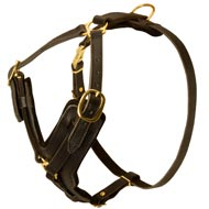 Exclusive Padded Designer Leather Bull Terrier Harness