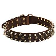 Leather Bull Terrier Collar with Brass Studs and Nickel Spikes