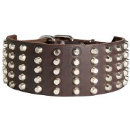 English Bull Terrier Large Genuine Leather Dog Collar Decorated with Studs