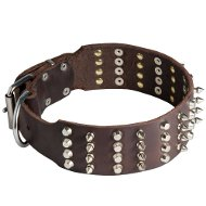 English Bull Terrier Leather Wide Dog Collar with Spikes and Pyramids
