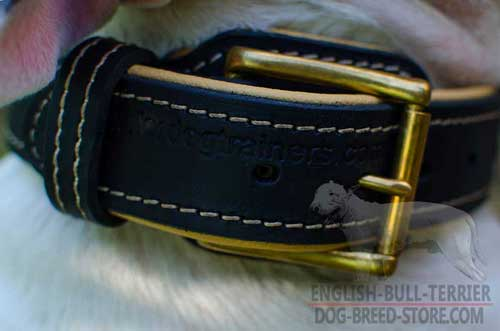 Strong Brass Buckle on Nappa Padded Leather Dog Collar
