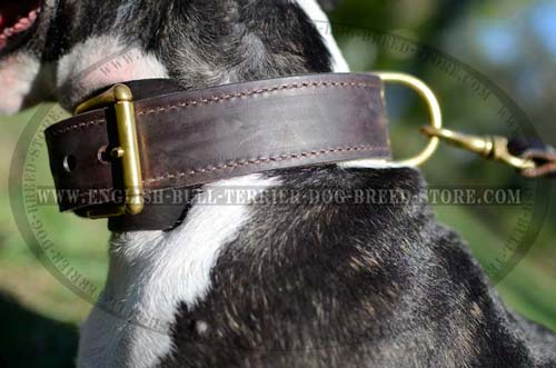 Solid Brass Hardware of Two Ply Leather Dog Collar