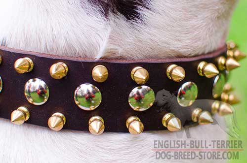 Stylish Studs and Spikes on Leather Bull Terrier Collar