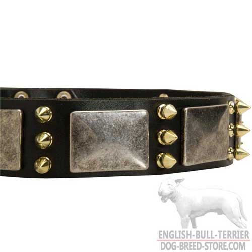 Brass Spikes on Bull Terrier Collar
