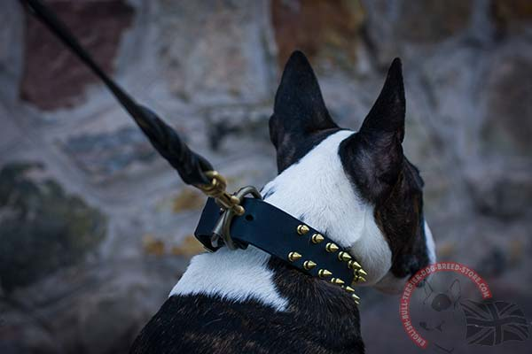 Leather English Bullterrier Collar with Brass D-Ring