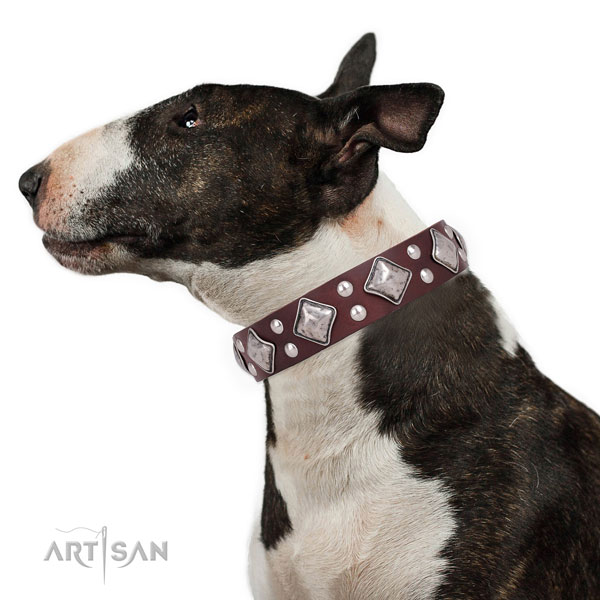 Everyday walking studded dog collar made of top rate natural leather