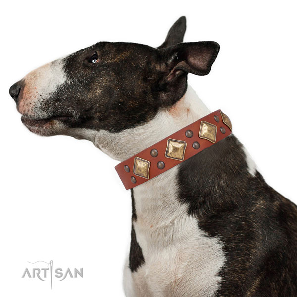 Walking adorned dog collar made of strong leather