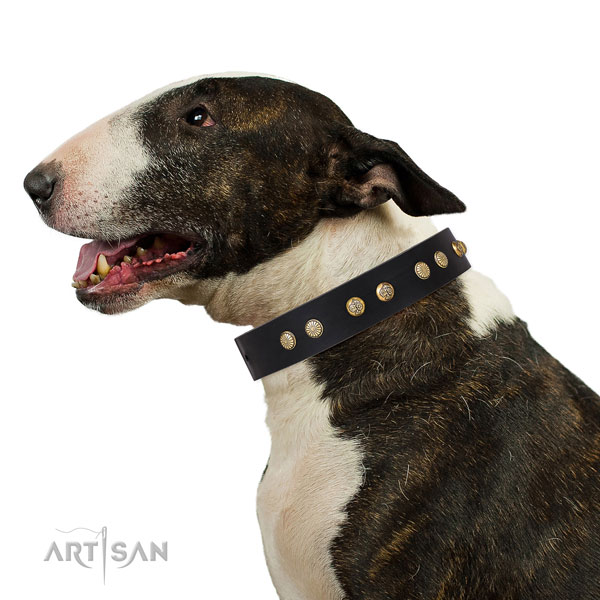 Exceptional embellishments on daily walking full grain genuine leather dog collar