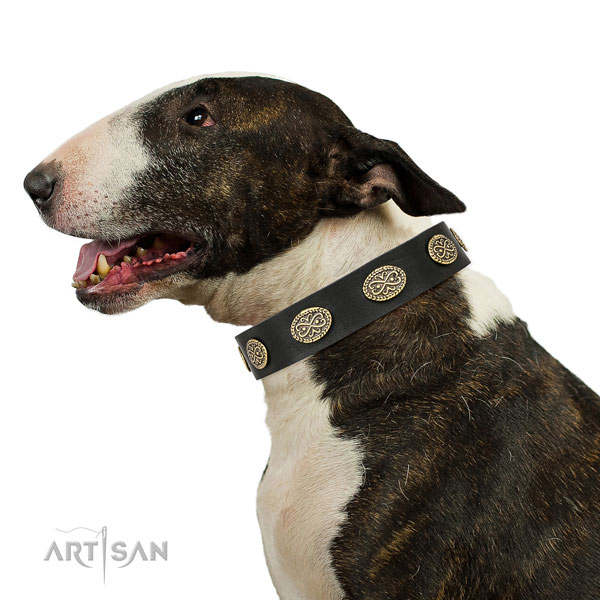 Unusual adornments on walking full grain leather dog collar