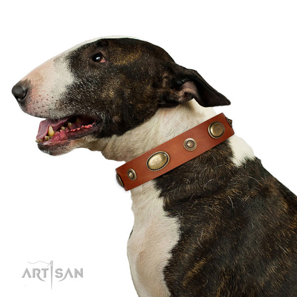 Handy use dog collar of natural leather with extraordinary adornments