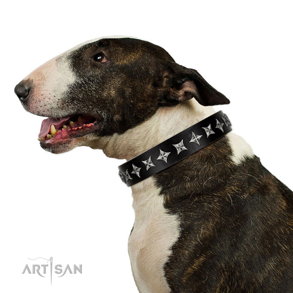 Comfy wearing adorned dog collar of quality leather