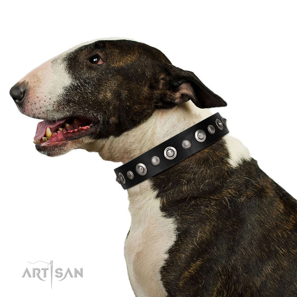 Reliable leather dog collar with significant decorations
