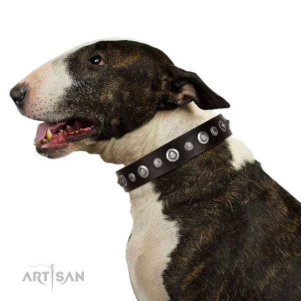 Best quality natural leather dog collar with awesome embellishments