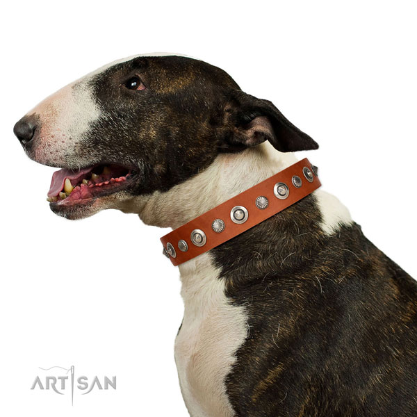 Strong genuine leather dog collar with incredible adornments