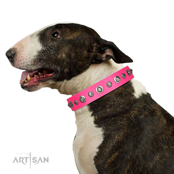 Leather collar with corrosion resistant hardware for your attractive doggie