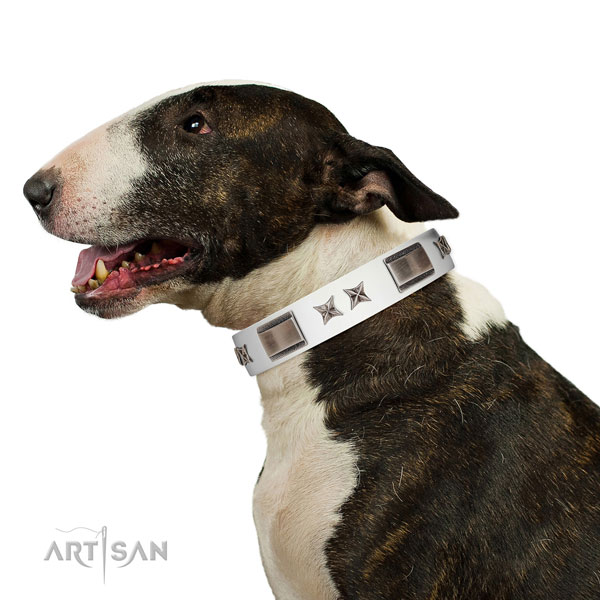 Unusual collar of leather for your handsome pet