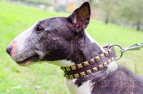 Hand-Decorated Elegant Leather Dog Collar for Bull Terrier