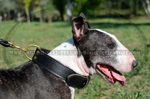 Functional Leather Bull Terrier Collar with Brass D-Ring for Quick Lead Attachment