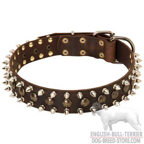 Walking Spiked and Studded Bull Terrier Collar