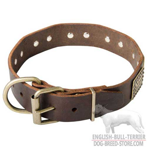 English Bull Terrier Collar with Brass Buckle