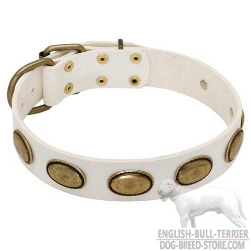 Vintage White Leather Bull Terrier Collar of Fashion Design