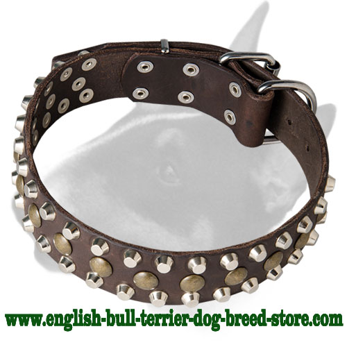 Leather Dog Collar for Bull Terrier walking and training