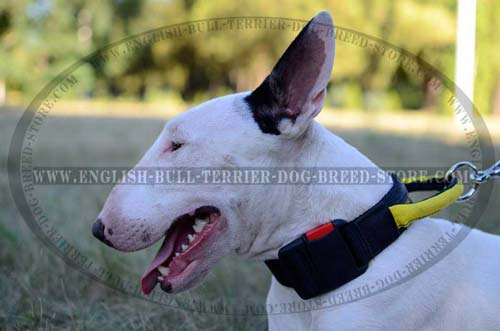 All Weather Nylon Dog Collar for Bull Terrier Training and Walking