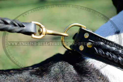 Solid D-Ring on Leather Bull Terrier Collar