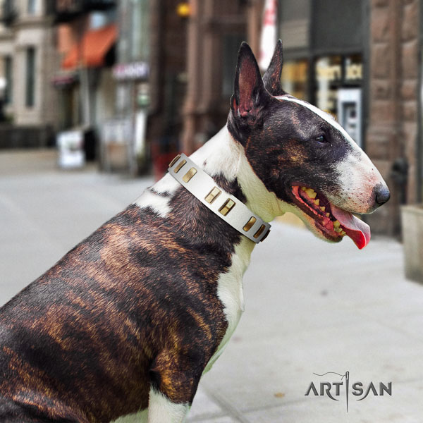 Bull Terrier walking dog collar of exquisite quality natural leather