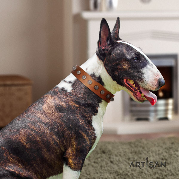 Bull Terrier walking dog collar of designer genuine leather