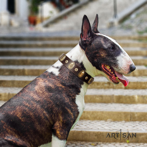 Bull Terrier everyday use dog collar of trendy leather
