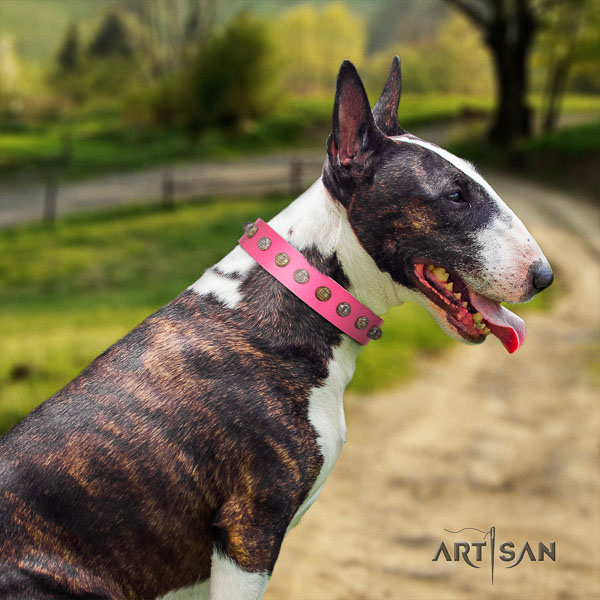 Bull Terrier comfortable wearing dog collar of fashionable leather