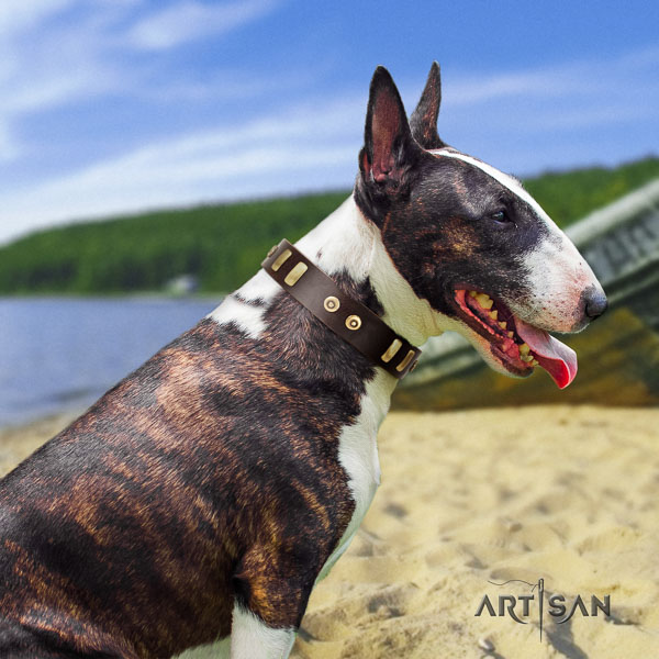 Bull Terrier daily use dog collar of significant quality genuine leather